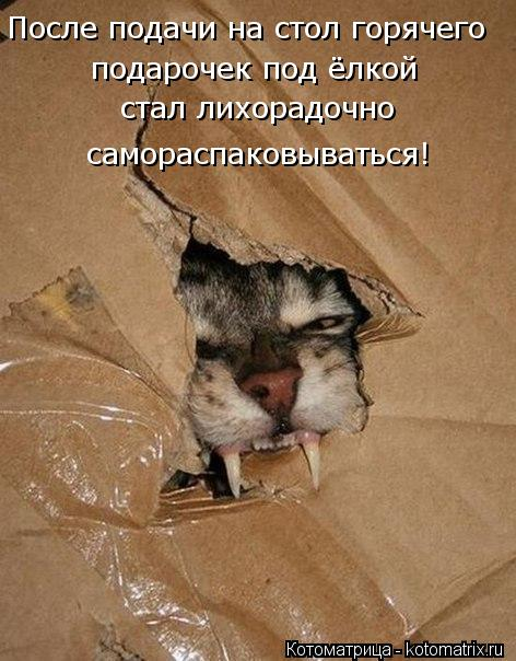 Котоматриця!)))) - Страница 10 Kotomatritsa_q