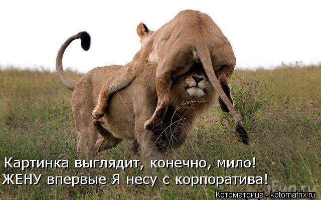 Котоматриця!)))) - Страница 10 Kotomatritsa_V