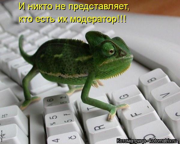 Котоматрица Kotomatritsa_mB