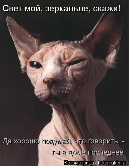 Котоматрица Kotomatritsa_ac