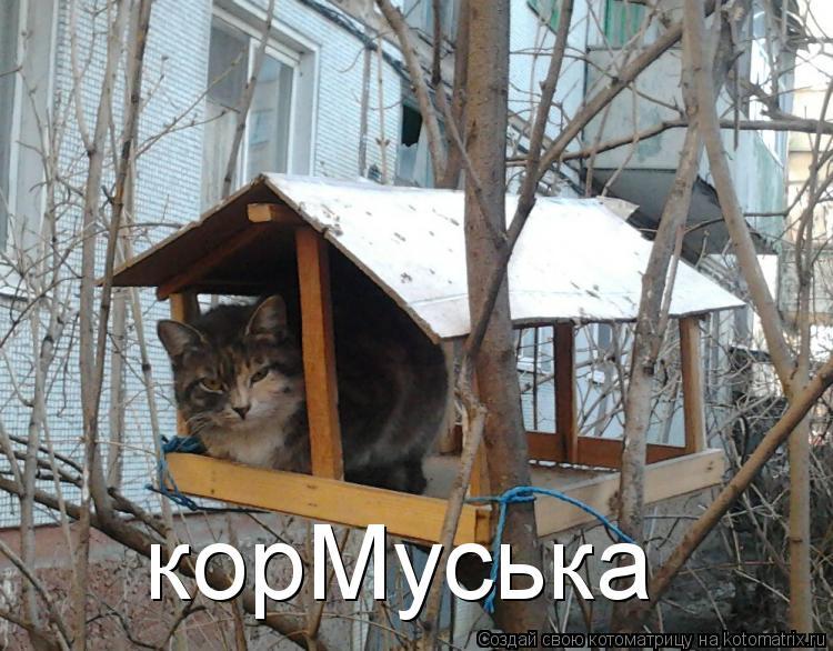 Кошачий юмор Kotomatritsa_Td