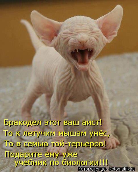 Кошачий юмор Kotomatritsa_ld