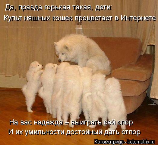 Картинки. Разные. Kotomatritsa_8