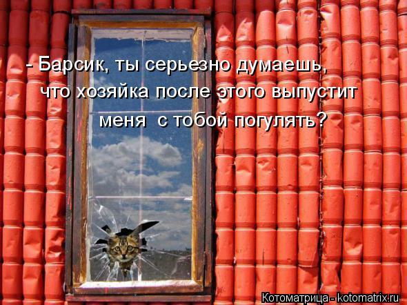 kotomatritsa_9B.jpg