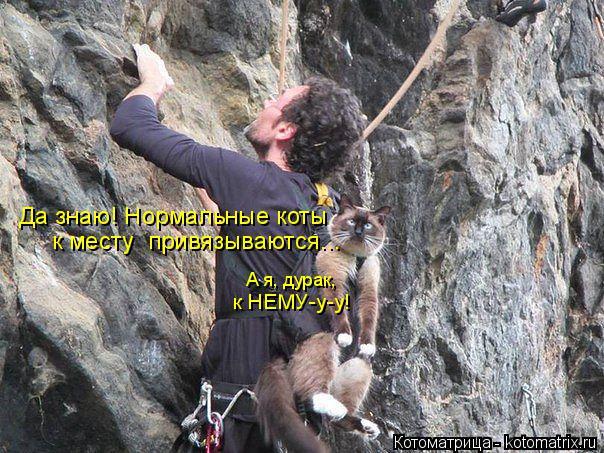 Наши забавные,смешные и разумные братья меньшие. Kotomatritsa_v2