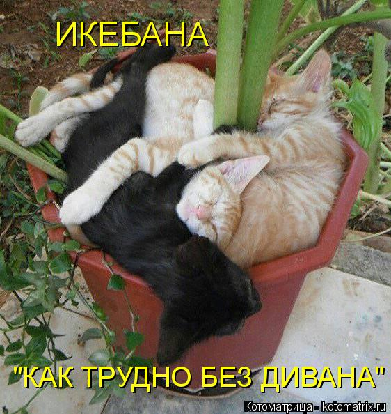 Котоматрица - 3 - Страница 38 Kotomatritsa_8-