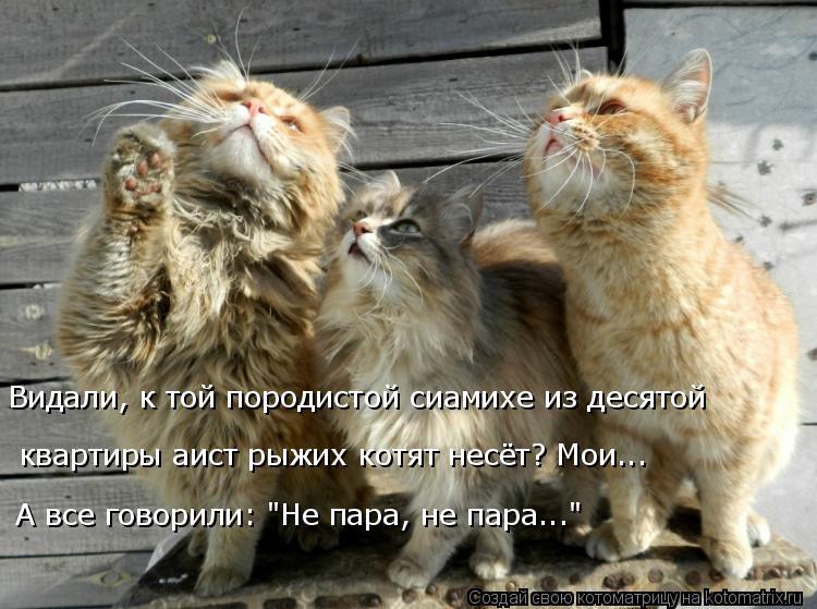 Котоматрица - 3 - Страница 38 Kotomatritsa_YK