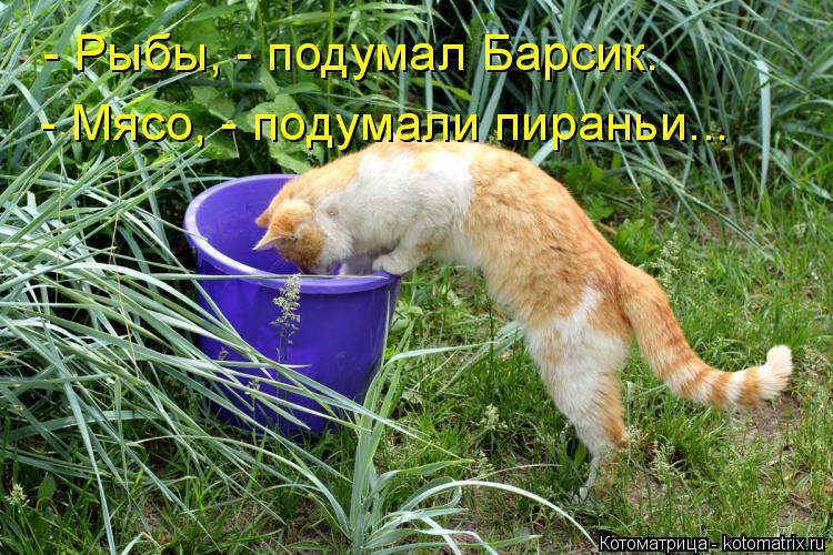 Котоматрица - 3 - Страница 38 Kotomatritsa_Es