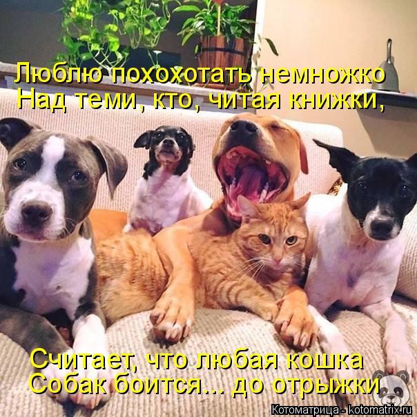 kotomatritsa_UF.jpg