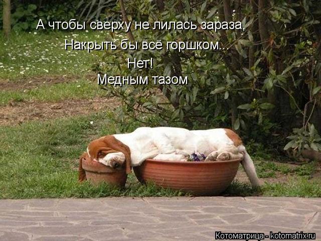 kotomatritsa_xs.jpg