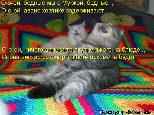 Котоматрица -2  - Страница 5 Kotomatritsa_Z