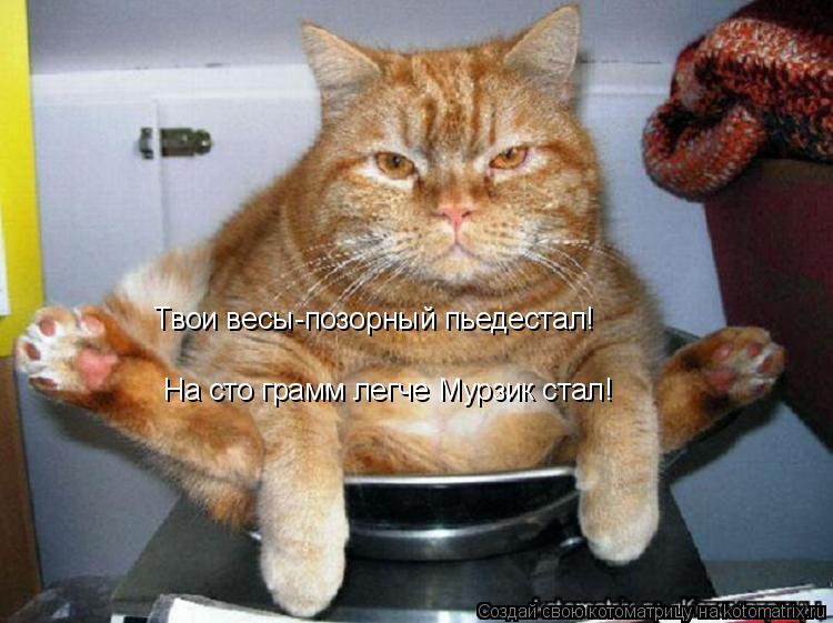 kotomatritsa_K.jpg