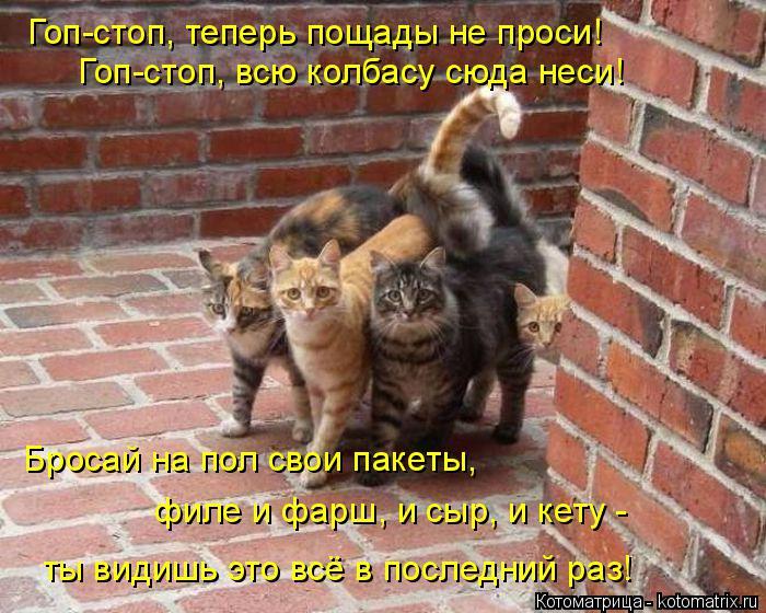 Котоматрица - 4 - Страница 26 Kotomatritsa_a2