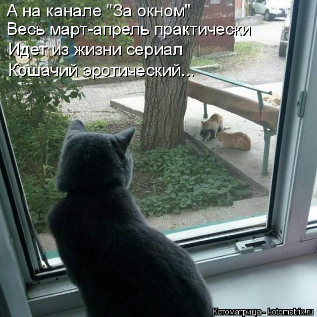 Котоматрица - 4 - Страница 26 Kotomatritsa_E