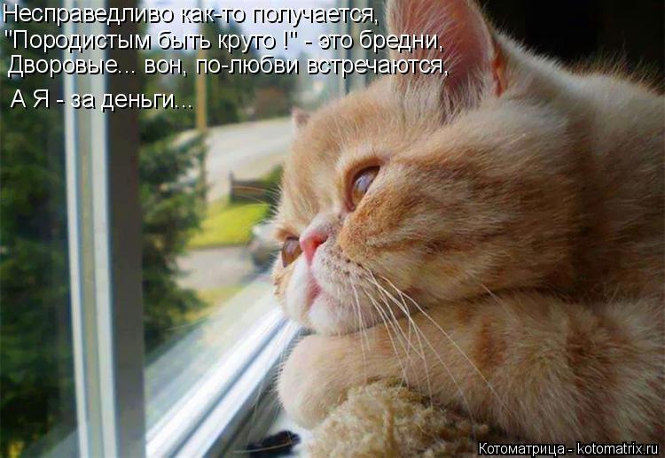Котоматрица - 4 - Страница 26 Kotomatritsa_6