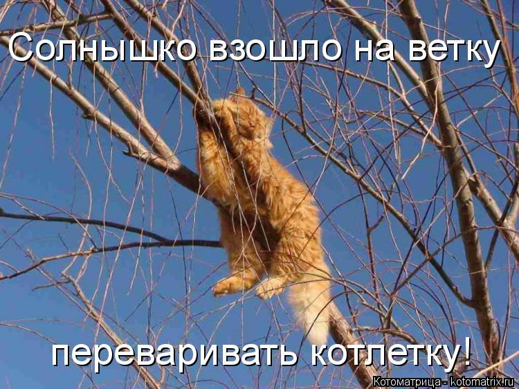 Котоматрица - 4 - Страница 26 Kotomatritsa_W