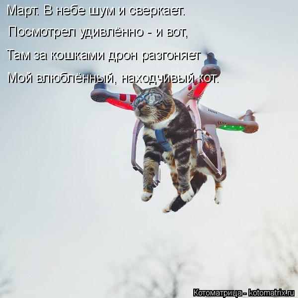 kotomatritsa_o.jpg