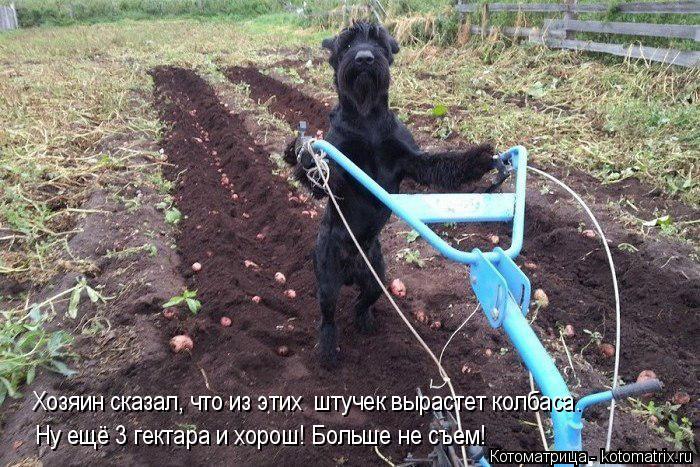 Котоматрица -2  - Страница 5 Kotomatritsa_t