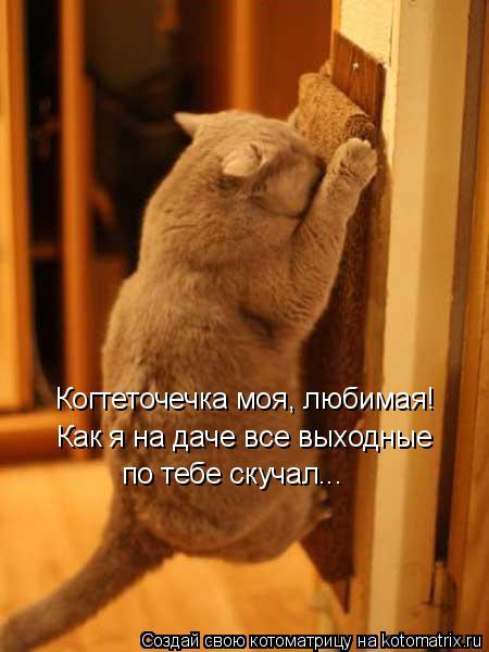 Котоматрица - 4 - Страница 26 Kotomatritsa_y