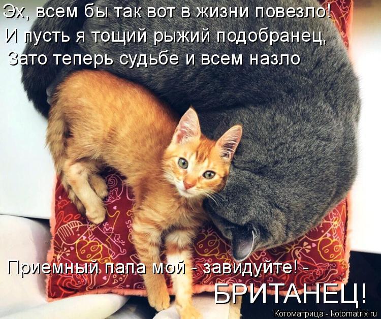Котоматрица - 3 Kotomatritsa_L