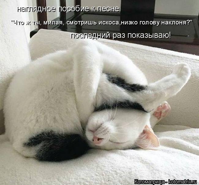 Котоматрица - 3 Kotomatritsa_P
