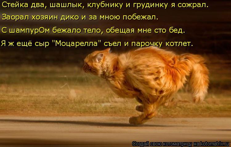 Котоматрица - 3 Kotomatritsa_w