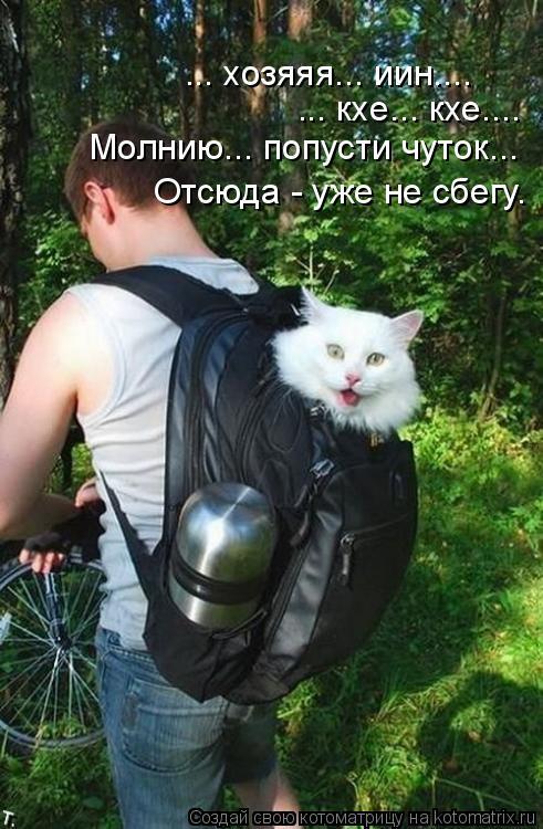 Котоматрица - 3 Kotomatritsa_zi