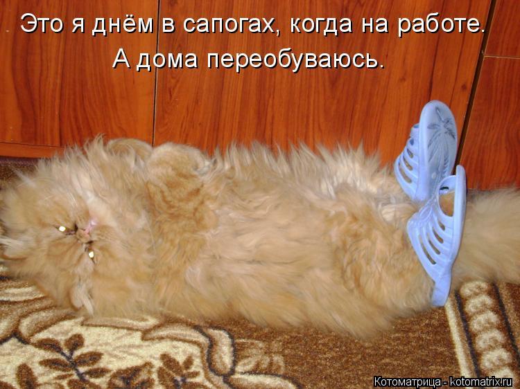 kotomatritsa_C.jpg