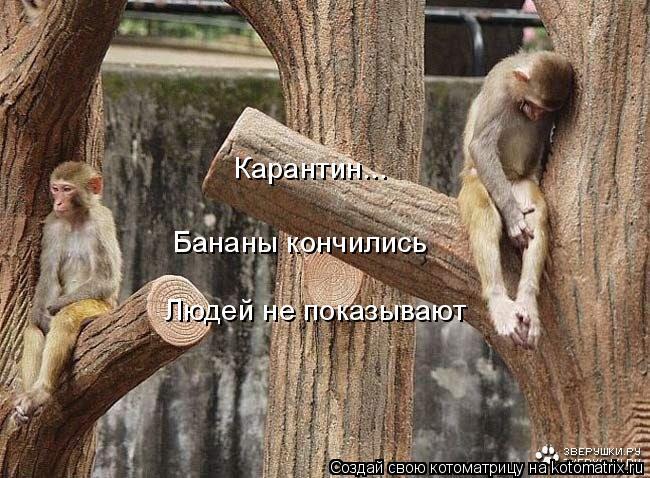Котоматрица: Бананы кончились Людей не показывают Карантин...