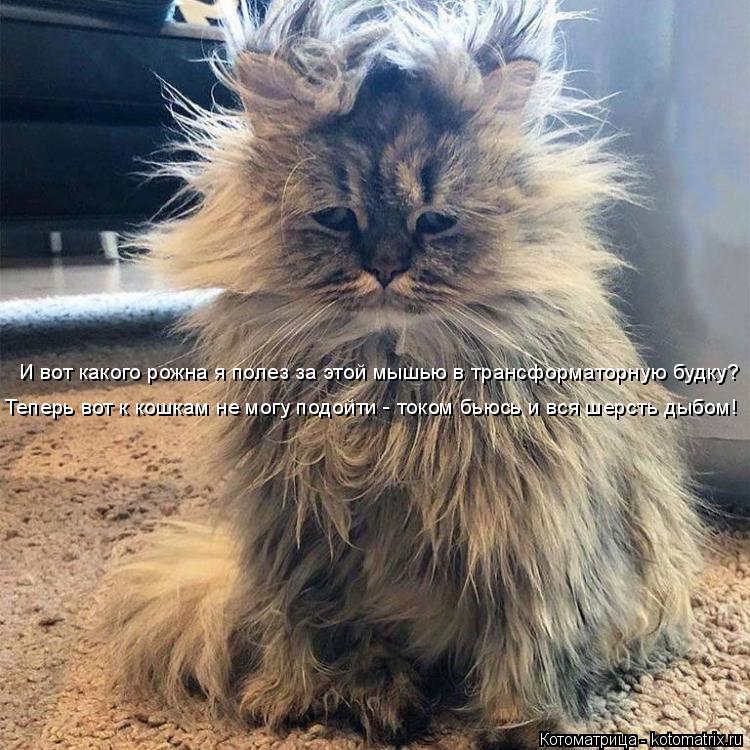 Котоматрица: И вот какого рожна я полез за этой мышью в трансформаторную будку? Теперь вот к кошкам не могу подойти - током бьюсь и вся шерсть дыбом!