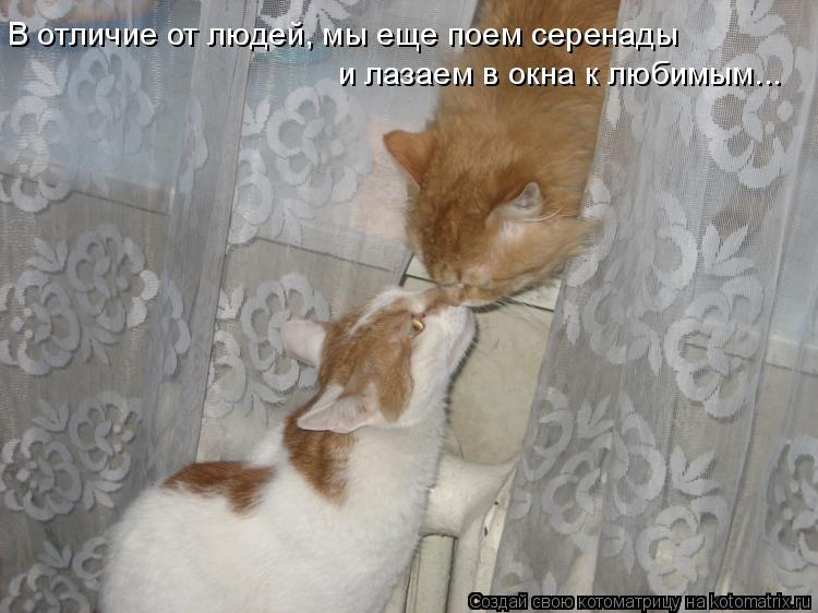 Котоматрица: Ð' отличие от людей, мы еще поем серенады Ð¸ лазаем в окна к любимым...
