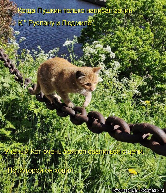 """Котоматрица: Когда Пушкин только написал зачин К """" Руслану и Людмиле"""", Учёный Кот очень боялся свалиться с цепи, По которой он ходил"""
