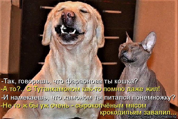 Котоматрица - 4 - Страница 6 Kotomatritsa_K
