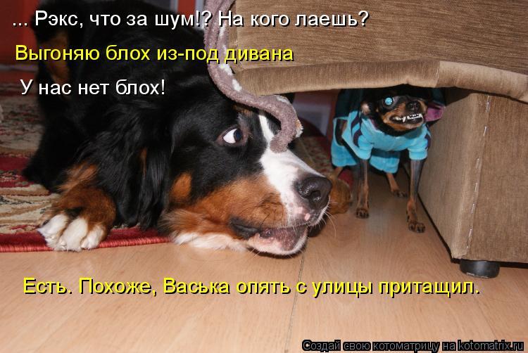Котоматрица - 4 - Страница 6 Kotomatritsa_Zo