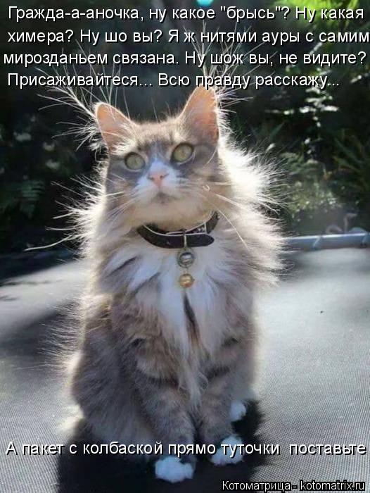 Котоматрица - 4 - Страница 6 Kotomatritsa__