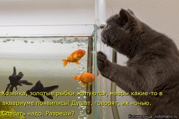Котоматрица - 4 - Страница 10 Kotomatritsa_l