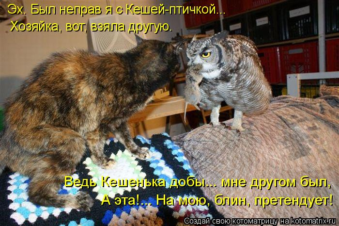 Котоматрица - 4 - Страница 10 Kotomatritsa_8