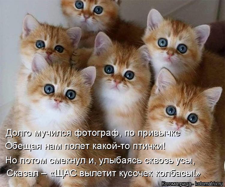 Котоматрица - 4 - Страница 10 Kotomatritsa_UL