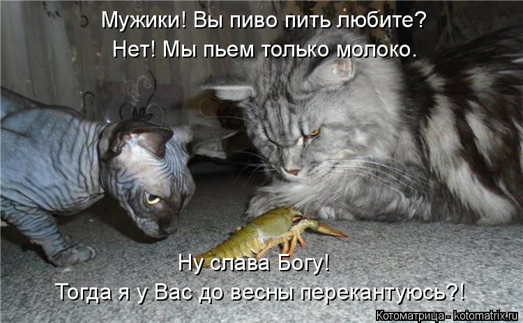 kotomatritsa_h.jpg
