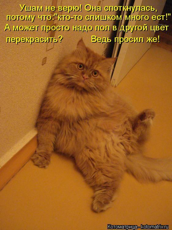 kotomatritsa_KJ.jpg