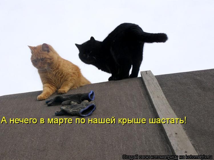 kotomatritsa_RR.jpg