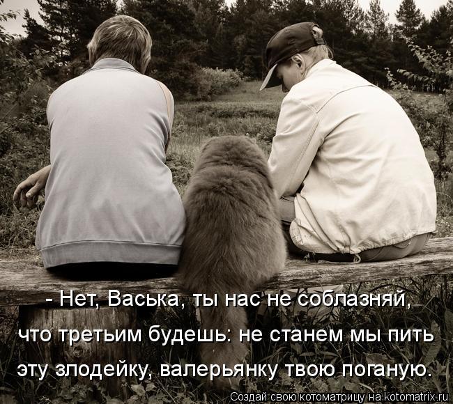 kotomatritsa_cd.jpg