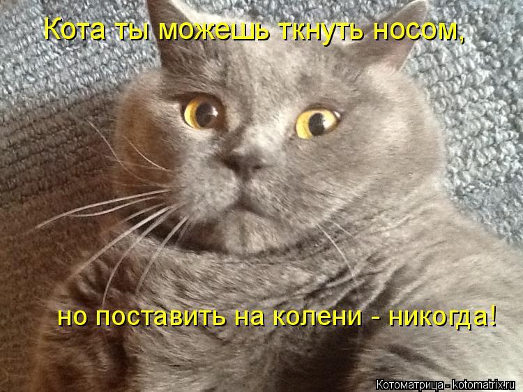 kotomatritsa_-.jpg
