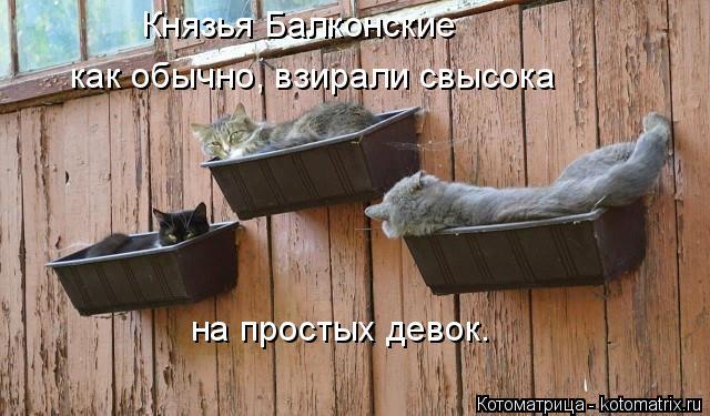 kotomatritsa_E.jpg