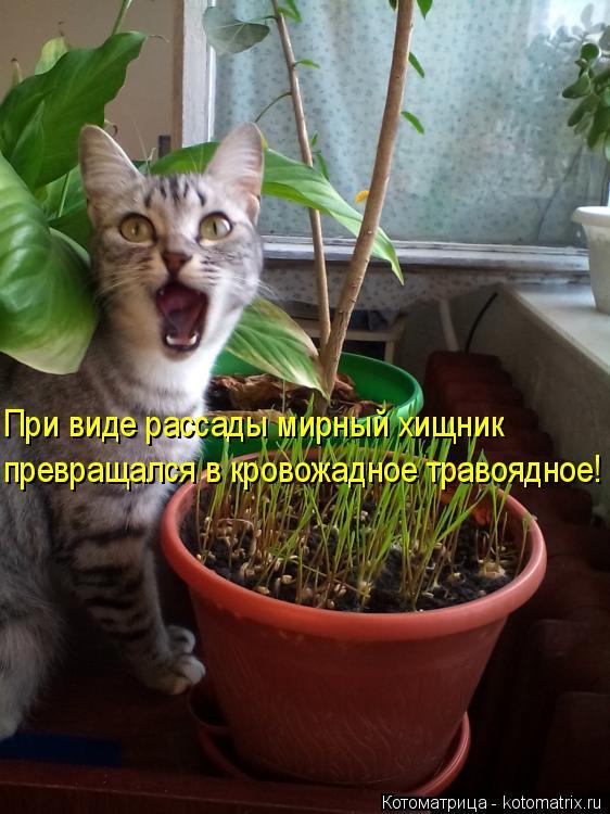 kotomatritsa_3s.jpg