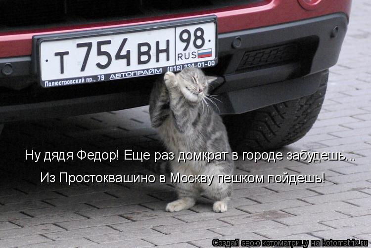 kotomatritsa_P.jpg