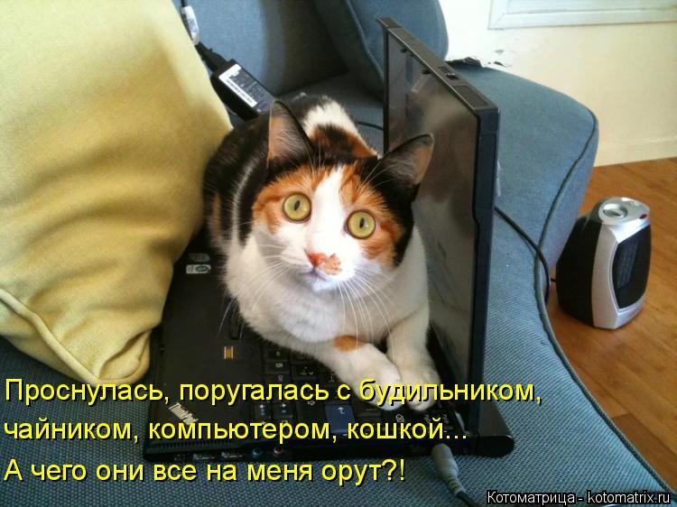 kotomatritsa_TG.jpg