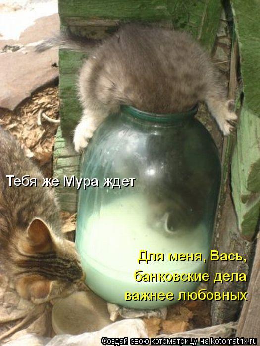 kotomatritsa_B.jpg
