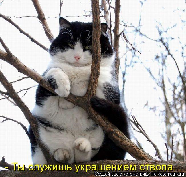 kotomatritsa_7.jpg