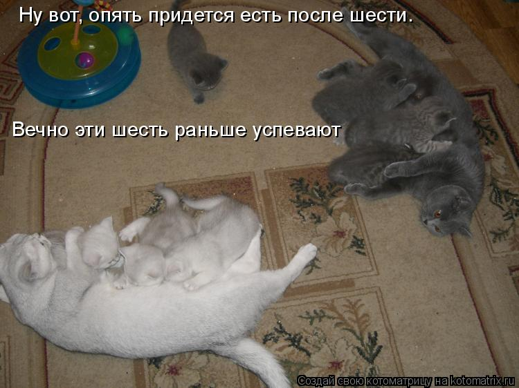 kotomatritsa_X.jpg